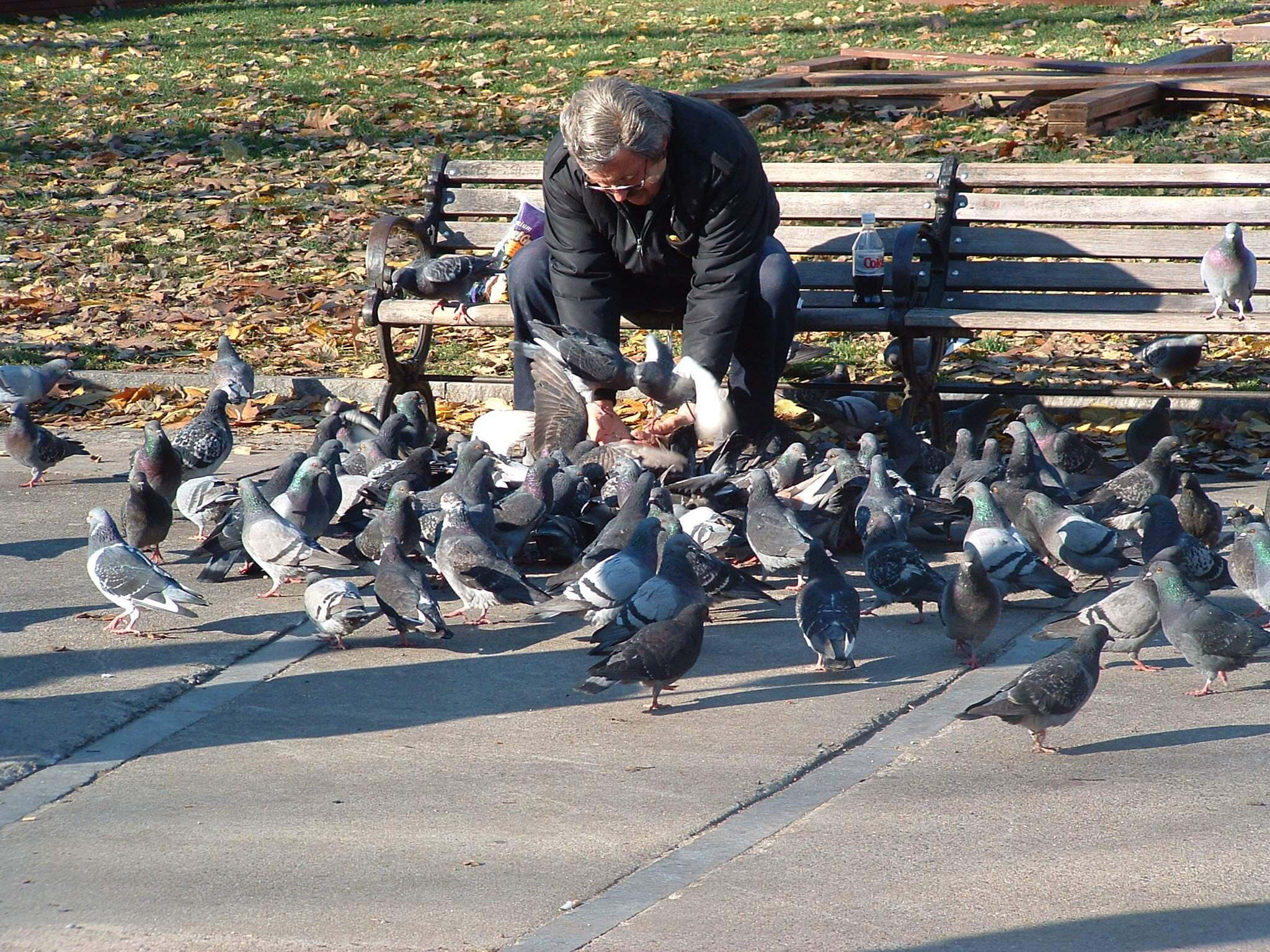 feeding the birds breadcrumbs